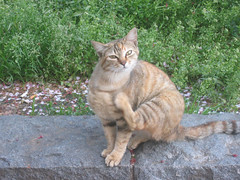 cat in Sumida park