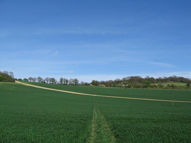 A Field in Kent