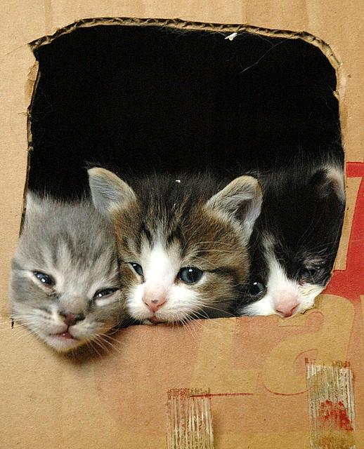 Three peeking out