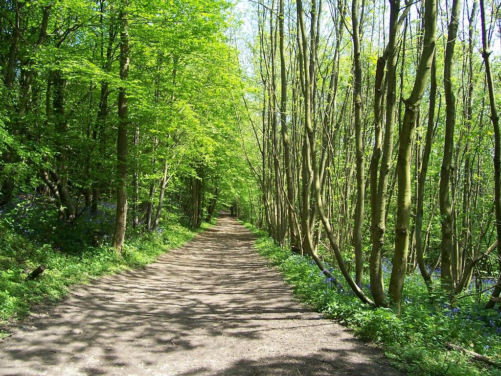 Path through Trosley Country Park