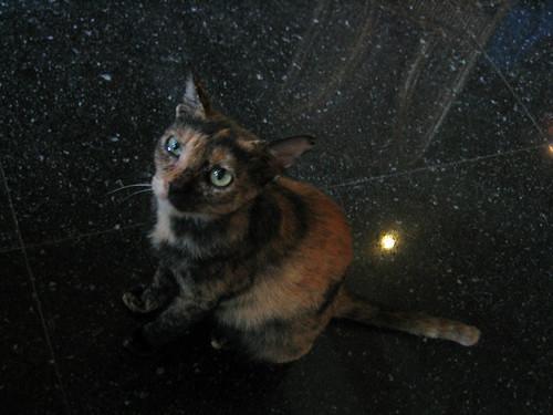 thailand, ko samui, cats IMG_1105.JPG