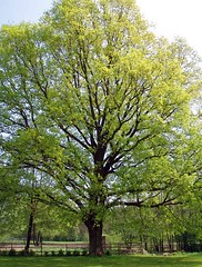 Trees, leaves&cones.