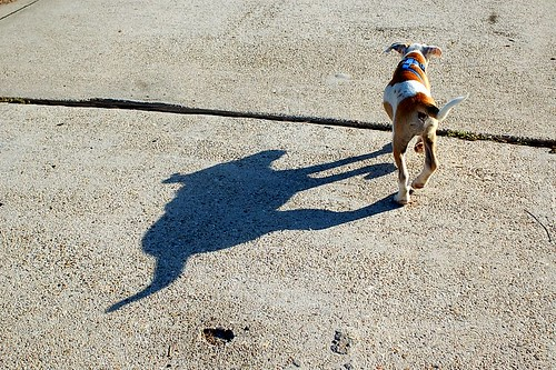 Matthew and his shadow.