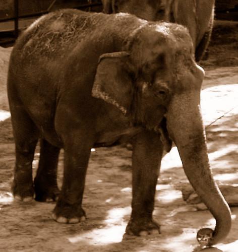 Smiling Elephant | Explore oppositeofsuper's photos on ...