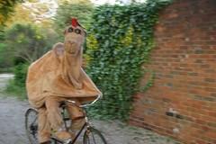 Camel Cycling