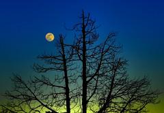 Yellow moon rising