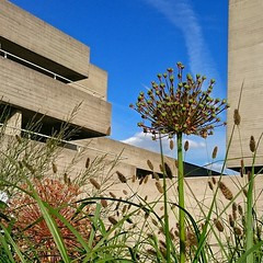 Brutal Foliage  #brutal_architecture #brutal #architecture #foliage #flowers #plants #London #nationaltheatre #southbank #SE1#concrete #blueskies