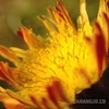 1st experiment with my macro lense. #flower #macro #macrophotography
