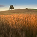 Barley Patch by Shutter Release Photography with Dylan Nardini