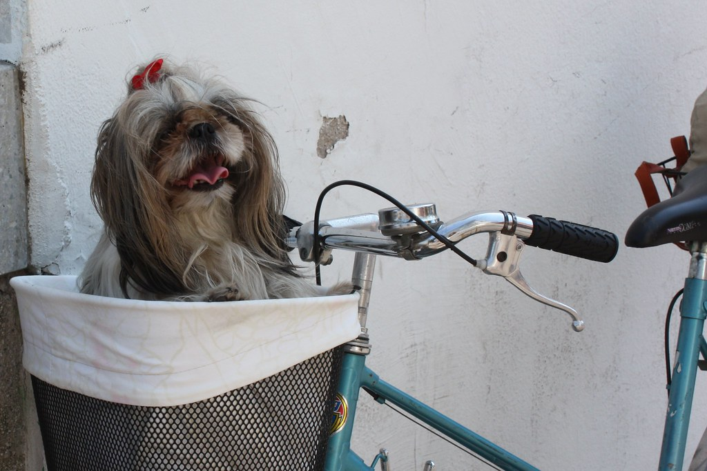 Dog in Bike Basket Ljubljana Slovenia