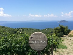 Assyrtiko vineyard