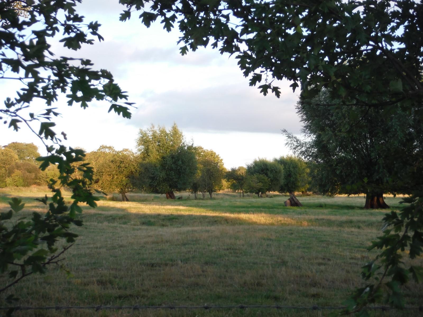 Harnham Water Meadows SWC Walk 254 Salisbury Circular