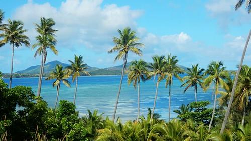Palm trees - Nacula island