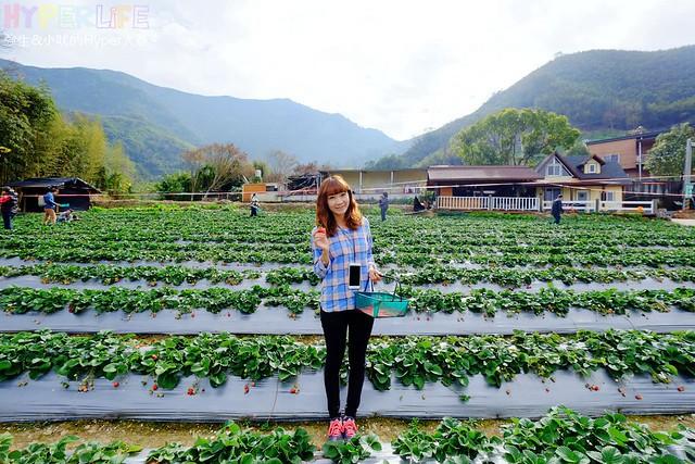 劉正男高冷草莓園 (5)
