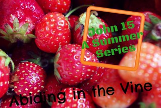Abiding in the Vine: Series
