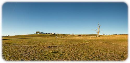 Farmhouse and Dead Tree Near the Castlereagh Highway