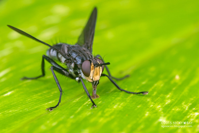 Fly - DSC_4232