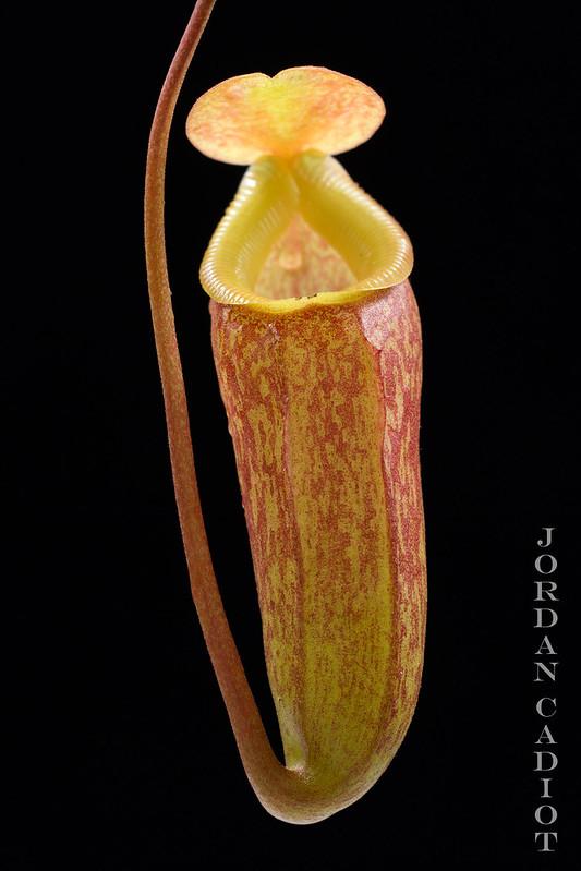 Plantes Phyliok  19666990066_92662e6278_c
