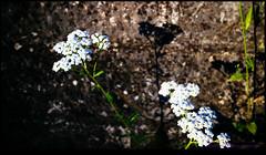 150706-1532-EOSM.jpg