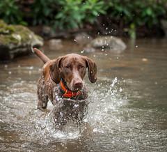 475 Piper making a splash
