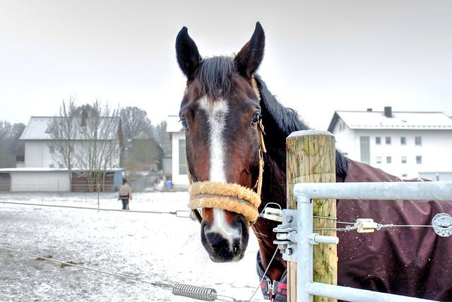 Pferd im Winter - Horse in winter