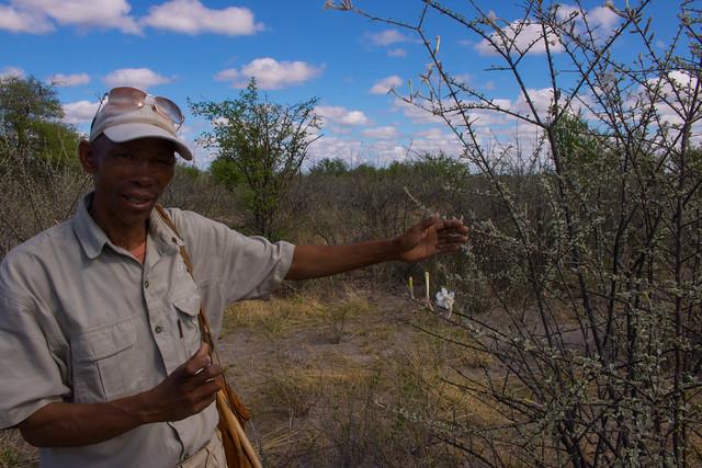 Bushman walk