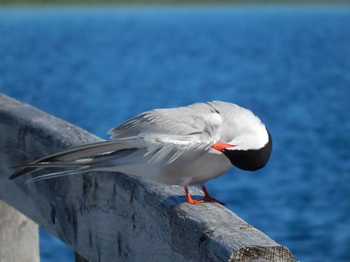PEI NP - Greenwich - bird