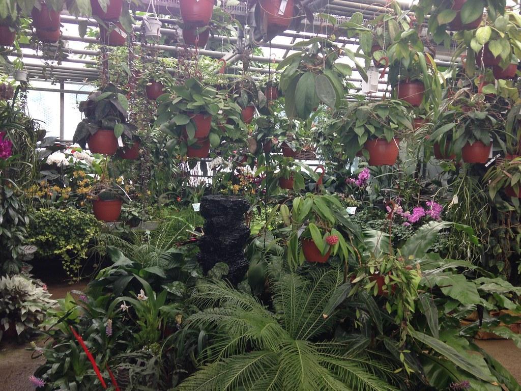 Orchidarium de Prangins 19119152140_c74bc0d569_b