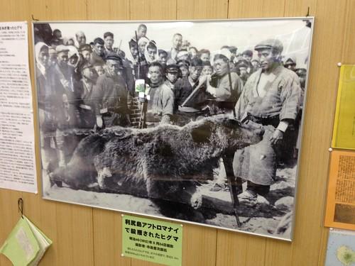 rishiri-island-local-history-museum-bear