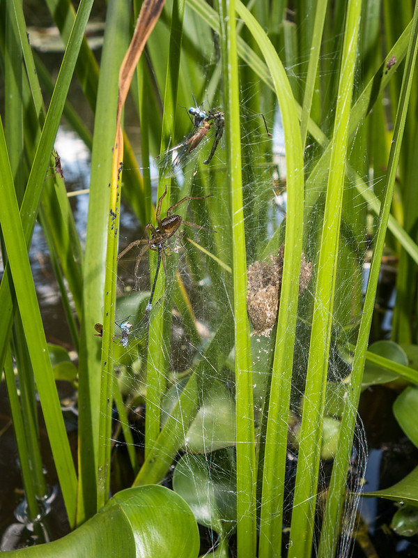 fishing spider nursery