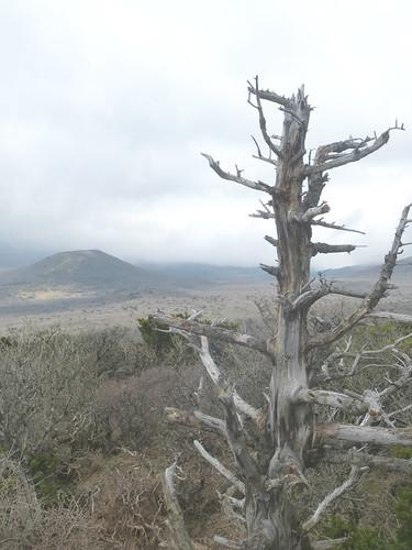 Co-Jejudo-Hallisan-Montée-Yeongsil (16)