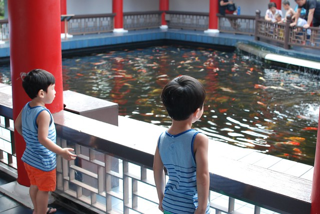 Jerry & Jerome watching the fishes in the koi pond.