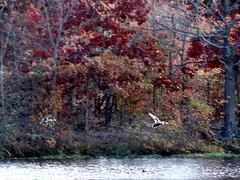 Wantagh - Twin Lakes Preserve - Autumn (56)