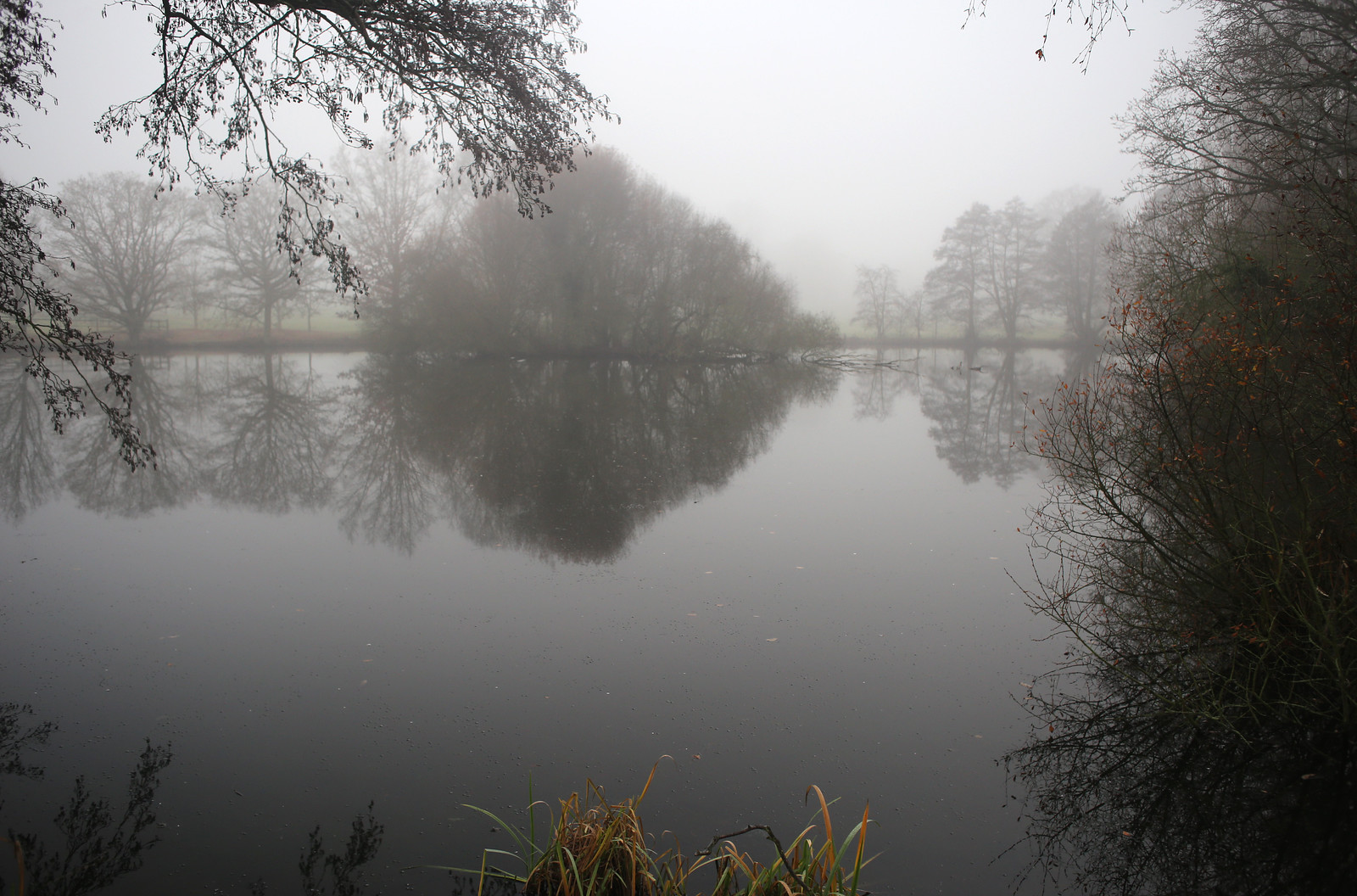 Loseley Park mist Mist on the pond in Loseley Park, Surrey