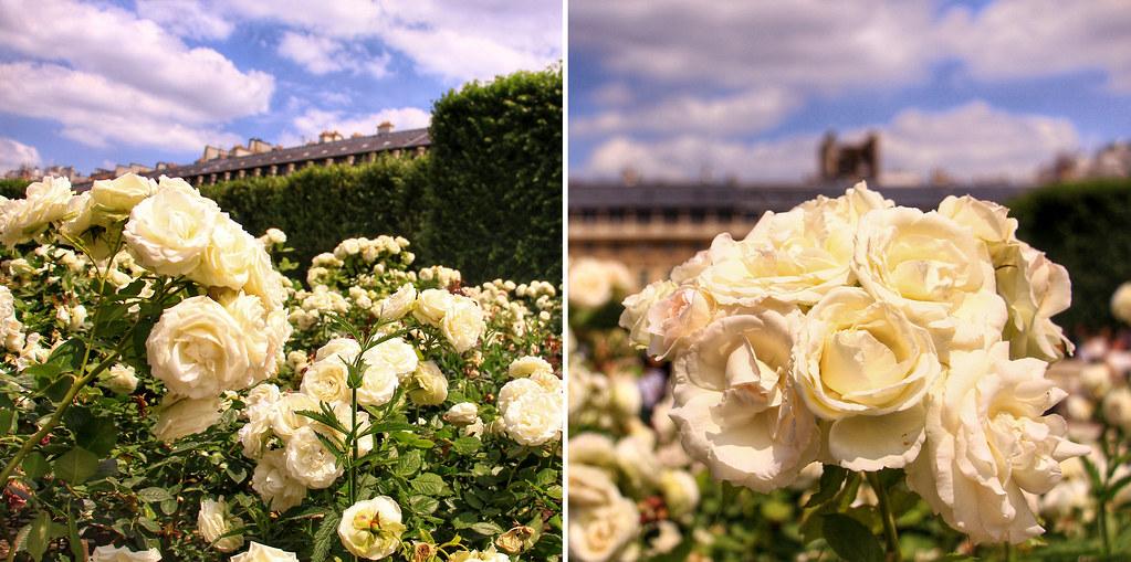 https://www.google.fr/search?client=safari&rls=en&q=Jardin+du+Palais+Royal,+Paris&ie=UTF-8&oe=UTF-8&gfe_rd=cr&ei=fn2CVfGtIMexcr2FnKAM