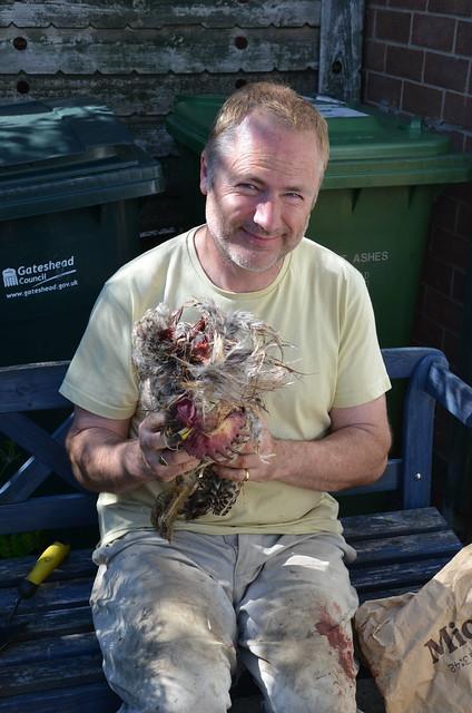 plucking a chicken Jul 15