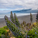 Lost Coast by Rich Luibrand