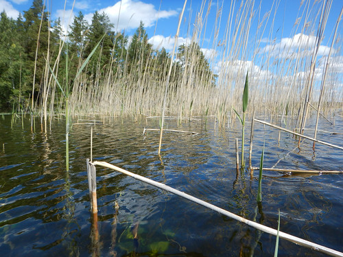 lake reed landscape sweden schweden shore sverige scandinavia östergötland boxholm sommen östergötlandslän torpön asbyfjärden