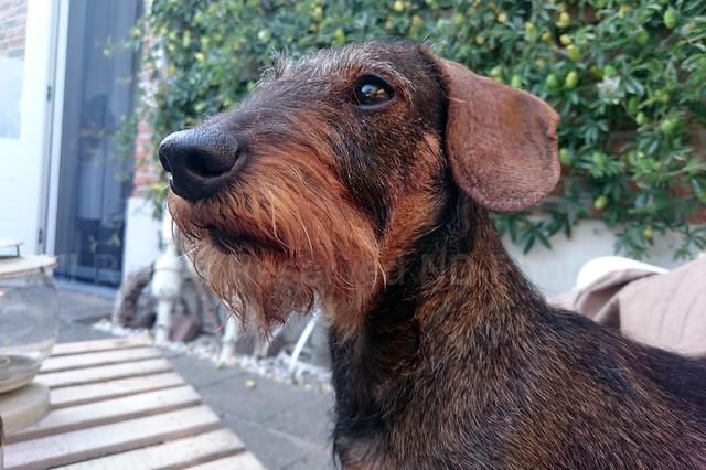 Ollie Portrait