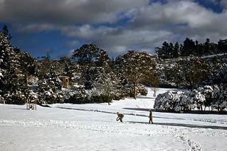 Children in Snow, Memorial Park, Blackheath
