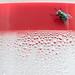 sharp as a tacky fly by MyArtistSoul