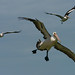 The magnificent flying machines (best viewed large) by Emanuel Papamanolis