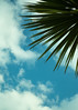 20150526-088_Blue Sky_White Clouds_Palm Fronds