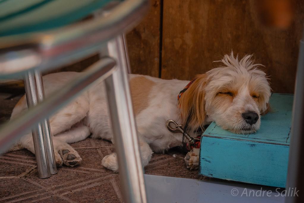 siesta :))  утомился.