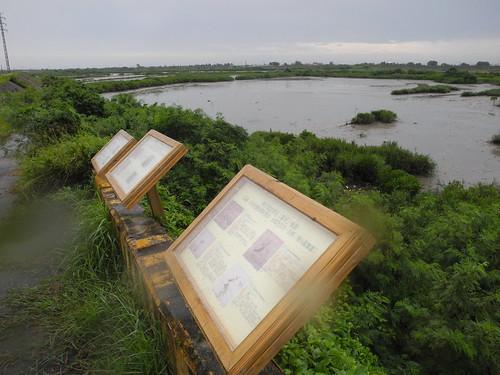 學甲溼地復育之後,生態豐富,堤防邊豎起了木製的解說教育牌。