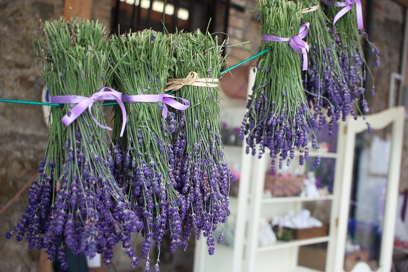 Lavender Harvest Party