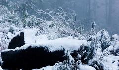 Snow in Brazil