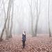The fog by Sarah-Louise Burns