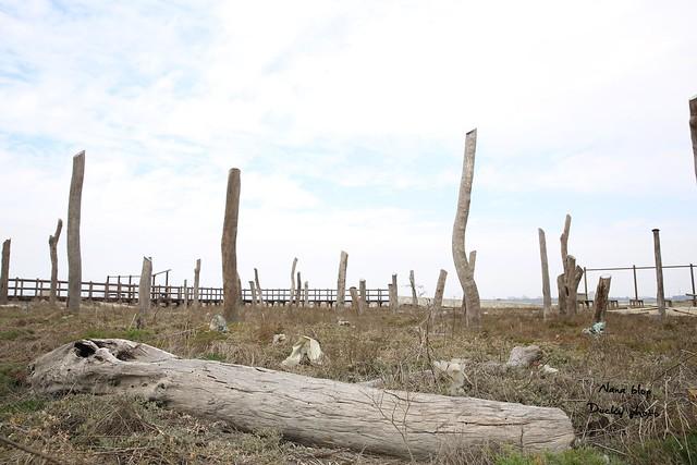 彰化福興-福寶濕地-漂流木公園 (9)