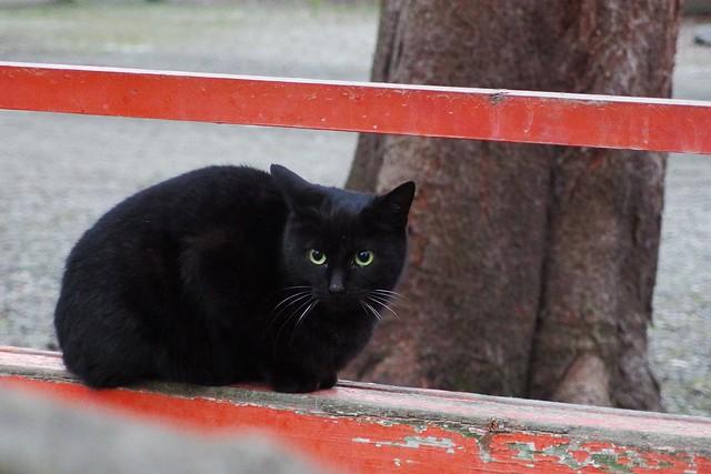 Today's Cat@2017-02-15